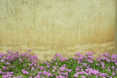 Oxalis flower  wall. In vintage tone Royalty Free Stock Images