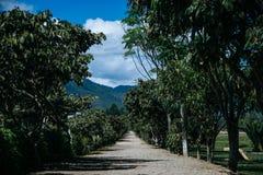 Oxapampa - Perú Stockbild