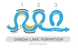 Oxbow jeziora formacja, wektorowy diagram Fotografia Stock