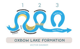 Oxbow lake formation, vector diagram. Oxbow lake formation diagram, vector illustration Stock Photography