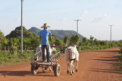 Oxcart cambogiano Fotografia Stock