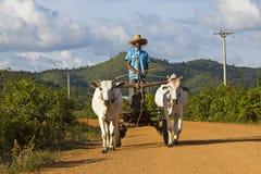Oxcart cambojano Imagens de Stock Royalty Free
