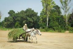Oxcart dans l'Inde image libre de droits