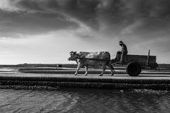 Oxcart jazda Zdjęcie Stock