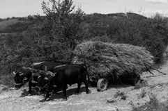 Oxcart Royalty Free Stock Photography