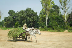 Oxcart w India Obraz Royalty Free