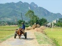 Oxe som släpar en vagn i risfältfält Fotografering för Bildbyråer
