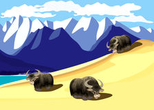 Oxen. Pasture in mountains. Vector illustration Stock Photos