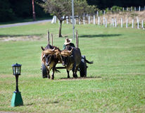 Oxen drags a vehicle Stock Images