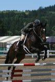 Oxer278 Foto de Stock Royalty Free