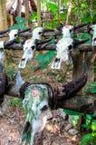 Oxeskallar från en by av Zhuang den kinesiska minoritetfolkgruppen Arkivfoton