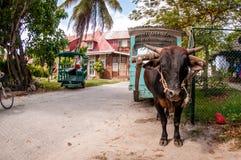 Oxevagn, La Digue, Seychellerna Arkivbilder