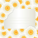 Oxeye daisy text card Royalty Free Stock Photography