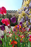 Oxford College Gardens. Spring flowers in the gardens of Oxford College in England Royalty Free Stock Photography