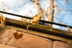 Oxidação da folha do outono congelada no ar Foto de Stock Royalty Free