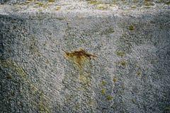 Oxidação no muro de cimento Fotografia de Stock