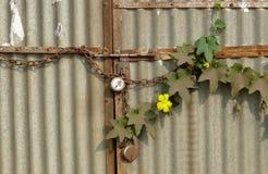 Oxidação, poeira e vida Imagens de Stock Royalty Free