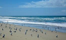 Oxnard Beach California Royalty Free Stock Image