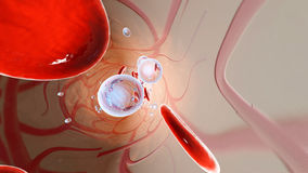 Oxygen molecules and Erythrocytes floating in the blood stream royalty free stock photos