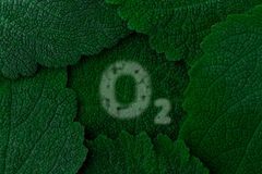 Oxygen, O2. Dark green leaves background. Close up Stock Photo