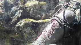 Oxygen tank under the ocean Royalty Free Stock Photos