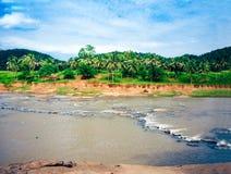 Oya river in Sri Lanka, Pinnawala Elephant Orphanage.  royalty free stock image