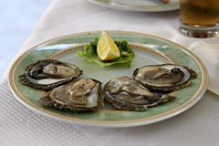 Oyster. Four oysters and lemon in the plate Royalty Free Stock Photography