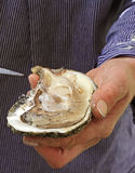 oyster Stock Images