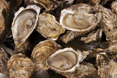 Oyster Royalty Free Stock Photos