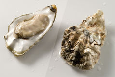 Oyster. Fresh opened oyster inside and outside Royalty Free Stock Photo