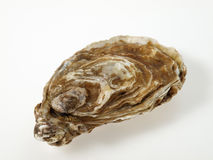 Oyster. Close up of a shell Royalty Free Stock Images