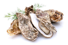 Oyster. Fresh oyster on white ground Stock Photo