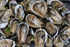Oyster Royalty Free Stock Images