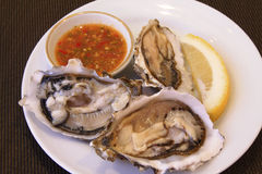 Oyster. Sea food picture for design Stock Photography