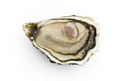 Oyster. Fresh oyster isolated on white background Royalty Free Stock Photo