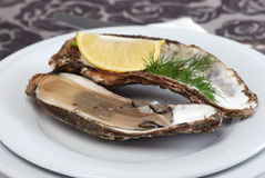Oyster Stock Image