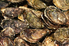 Oyster. In a market shop Royalty Free Stock Photos