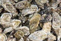 Oyster Stock Photos