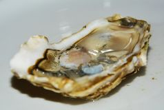 Oyster background, close up Stock Image