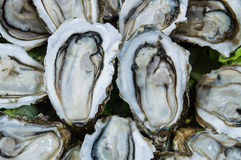 Oyster Background Stock Photo