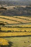 Oyster Bay Vineyards Stock Image