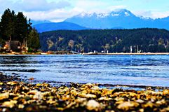 Oyster bed Stock Photo