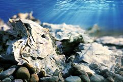 Oyster bed Royalty Free Stock Photography