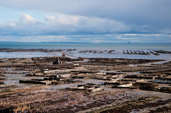 Oyster beds in Cancale, France. Royalty Free Stock Image