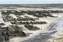 Oyster beds at Cancale Stock Photography