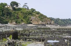 Oyster beds at Cancale Stock Photo