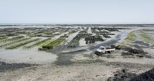 Oyster beds at Cancale Royalty Free Stock Images