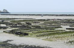 Oyster beds at Cancale Stock Images