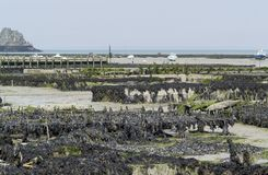 Oyster beds at Cancale Royalty Free Stock Image