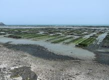Oyster beds at Cancale Stock Image